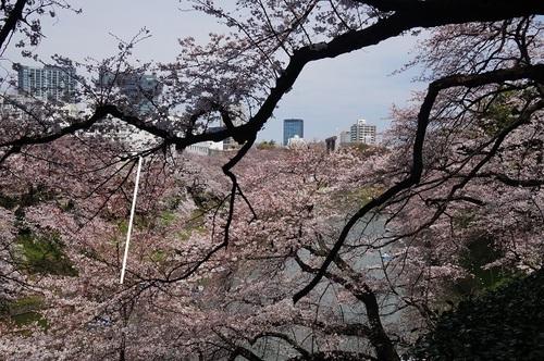 桜-014.jpg