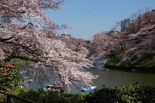 桜-8.jpg
