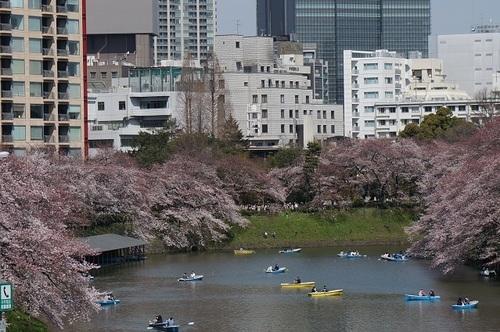 桜-010.jpg