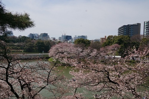 桜-012.jpg