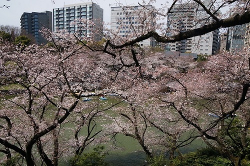 桜-013.jpg