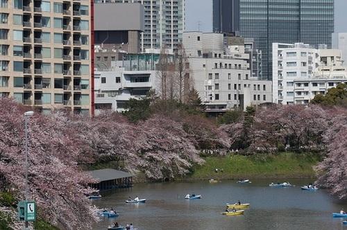 桜-9.jpg